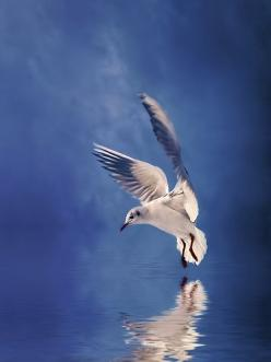 Daily Inspirations no. 431: Seagull, Blue, Daily Inspiration, Bees Honey Butterflies Birds, Beautiful Birds, Photo, Animal