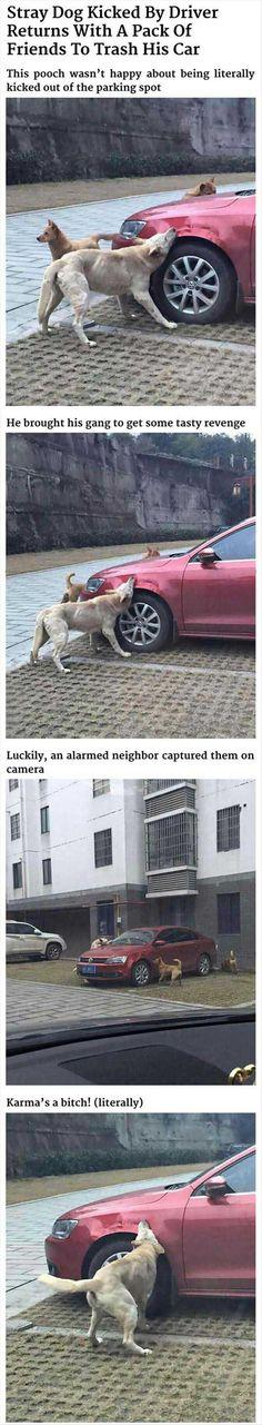 Dog Gets Revenge On Man Who Kicked Him - Don't ever think you can beat bad karma. It has a way of keeping score!: Awesome Dogs, Revenge, Dogs Shaming, Funny Stuff, Humor, Boys Funny, Cute Funny Dogs