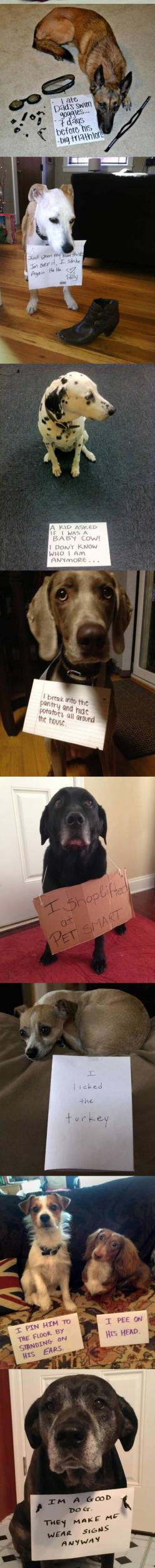 Dogs.: Funny Animals, Guilty Dog, Pet, Cute Dog Funny, Dogs Funny Shaming, Baby Cows, Funny Dog Shaming Signs, Cute Funny Dogs, Dog Shame Signs