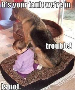 Dogs Think They're So Funny - 35 Pics: Animals, Dogs, Pet, Funny Stuff, Funnies, German Shepherds, Funny Animal