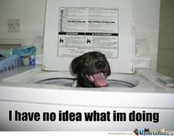 Dogs who are in way over their heads.: Funny Animals, Animal Pics, Dogs, Pets, Puppy, Humor, Funnies