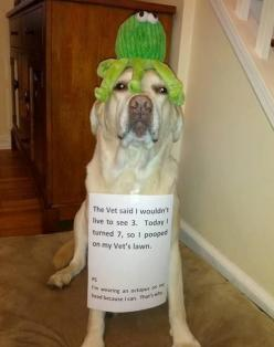 dogs with captions for 2013 | best funny dog pic w caption LOL Funny Dog Pic!: Animals, Dogs, Dog Shaming, Stuff, Funny Animal