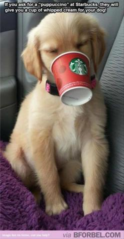 ☯Dump A Day Attack Of The Funny Animals - 33 Pics☯: Cup, Doggie, Animals, Dogs, Pet, Puppy, Whipped Cream, Golden Retriever