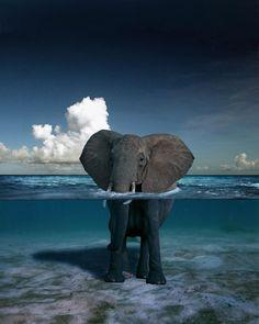 Elephant in clear water-amazing photo!