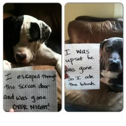 {escapee + emotional eater} this made me LOL: Bowie, Dog Shaming, Upset, Bad Dog, Emotional Eater