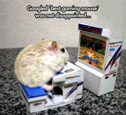 Even though that's really a hamster, it's still pretty great… (Gaming Mouse): Mice, Animals, Funny Pictures, Funny Stuff, Video Games, Humor, Gamingmouse