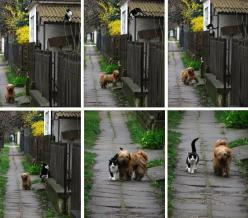 Every day - at the same time - she waits for him...    He comes... and they go for a walk: Cats, Picture, Animals, Time, Best Friends, Dogs, Walks, Pet