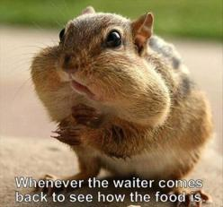 Every time.: Time, Animals, Funny Picture, Funny Stuff, So True, Humor, Funnies