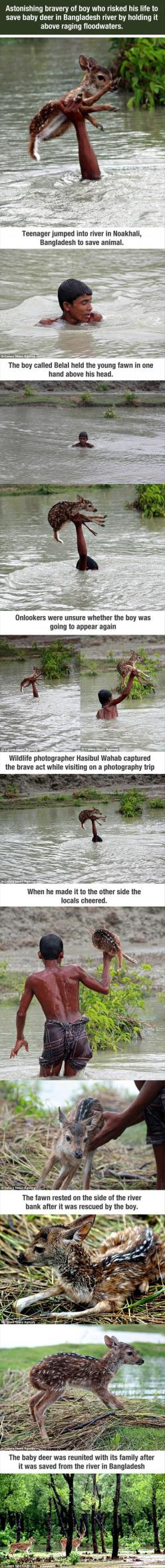Faith in humanity restored: Baby Deer, Restore Your Faith In Humanity, Faith Restored In Humanity, Hero, Faith In Humanity Restored, Animal Stories, Amazing People, Boy, Human Kindness