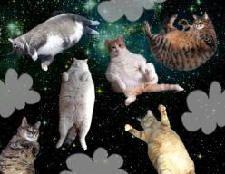Fat Cats in Space: The Flip Flop Collection by Melissa Sixma, via Behance: Galaxy Cat, Spaces, Spacecats, Floating Cats, Crazy Cat, Fat Cats, Animal, Cat Lady