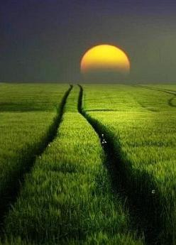 Field of Dreams !!!!! | See more Amazing Snapz: Photos, Moon, Nature, Green, Sunrise Sunset, Road, Fields, Sunsets Sunrise
