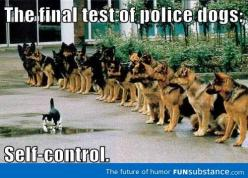 Final police dog test: Cats, Animals, Dogs, Quote, Funny Stuff, Humor, German Shepherds, Things, Walk