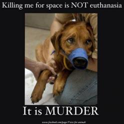 #Foster, Adopt, Rescue: Murder, Dogs, Animal Rights, Animal Cruelty, Pet, Animal Abuse, Space
