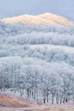 : Frosty Forests, Patch Mountain, Winter Scene, Winter White, Winter Wonderland, Magical Forest, Landscape, North Carolina