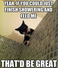 Funny Animal Pictures: Cats, Animals, Funny Cat, Funny Stuff, Humor, Funnies, Funny Animal
