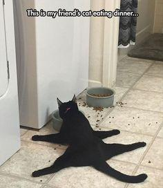 Funny Animal Pictures Of The Day ___ Click the Link in my Bio <@jurale13> and what you will find there use it as a Gift.: Funny Animals, Funny Animal Picture, Cat Eating, Funny Cat Pic, Eating Dinner, Funny Cats, Black Cats, Dog