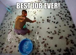 funny animals: Bucket List, Babies, Animals, Seaturtles, Dream Job, Funny, Things, Baby Turtles, Baby Sea Turtles