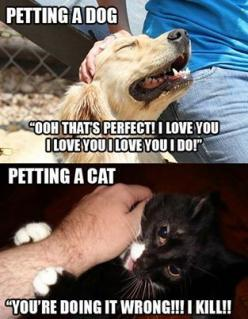 :): Funny Animals, Cats, Dogs, Pet, So True, Funny Stuff, Crazy Cat, Funnie