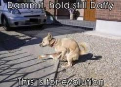 funny animals with captions - Google Search: Funny Animals, Funny Dogs, Funny Animal Pictures, Funny Captions, Funny Pictures, Funny Stuff, Funnies, Baby Animals, Animal Funny