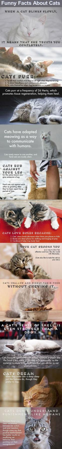 Funny Cat Facts Pictures, Photos, and Images for Facebook, Tumblr, Pinterest, and Twitter: Kitty Cats, Cats Facts, Funny Cat, Kitty Facts, Cat Love, Crazy Cat, Cat Facts, Animal