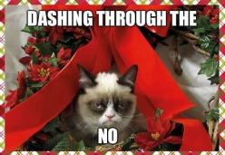 funny christmas memes - Google Search: Cats, Holiday, Grumpycat, Funny Stuff, Humor, Grumpy Cat Christmas, Funnie, Animal