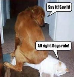 funny dog pictures with captions - Bing Images: Funny Animals, Cats, Funny Dogs, Dog Rules, Funny Stuff, Humor, Funnies, Dogsrule