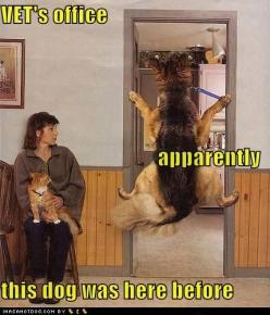 funny german shepherd pictures | german shepherdLoldogs - Dogs - Puppy Dog Pictures - I Has A Hotdog ...: Animals, Dogs, Pet, Funny Stuff, Funny Animal, German Shepherd, Know