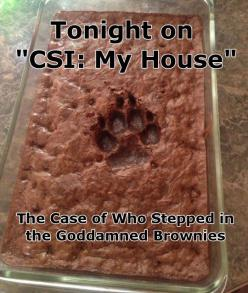 funny: Giggle, Funny Stuff, Humor, Funnies, Things, Dog, Csi, Animal