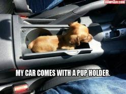 Funny Picture Dump Of The Day – 48 Pics: Car, Pupholder, Animals, Dogs, Pup Holder, Funny, Puppy