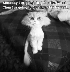 Funny Picture Dump Of The Day – 70 Pics!: Cats, Animals, Funny Picture, Funnies, Haircut, Funny Animal, Fluffy Cat, Kitty