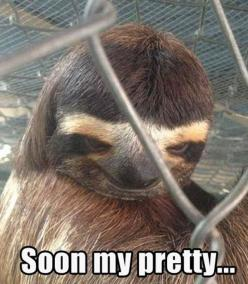 Funny Pictures Of Animals | Fun Claw: Funny Animal Pictures With Captions - 24 Pics: Giggle, Sloths, Animals, Creepy Sloth, Funny Stuff, Humor, Funnies