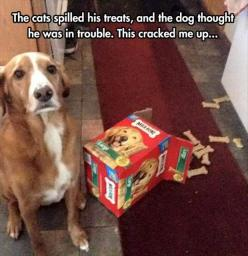 Funny Pictures Of The Day - 58 Pics: Aww Poor, Funny Dogs, Poor Doggie, 2015, Awww Poor, Damn Cats, Cats Spilled, Face Dogs, Cute Dogs