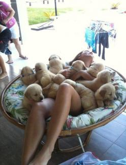 funny-puppies-and-girl: Puppies, Animals, Dogs, Golden Retrievers, Pet, Funny, Puppys, Things, Heavens