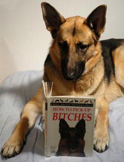 : Germanshepherd, Animals, Dogs, Funny Stuff, Humor, Funnies, German Shepherds