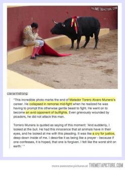Good guy matador. These stories make me want to cry!: Bull Fight