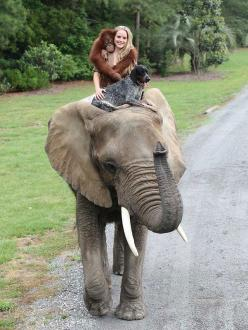 Gorilla Suryia & Dog Roscoe & Elephant Bubbles friends forever: Picture, Elephants, Bucket List, Animals, Life, Best Friends, Dogs, Things