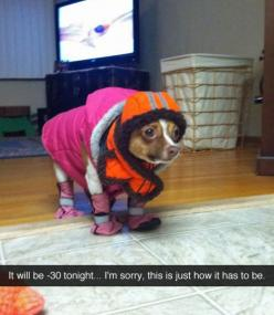 gotta keep them warm...I need to find an outfit like this for my boys!: Giggle, Animals, Dogs, Stuff, Funny Pictures, Funnies, Chihuahua
