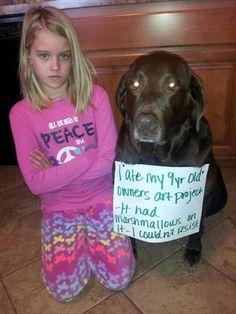 Haha so cute: Dog Signs Of Shame, Pet, Baby Cow, Animal Shaming, Funny Animal, Dumb Animals, Cute Funny Dogs, Funny Dog Shaming Signs, Dog Shame Signs