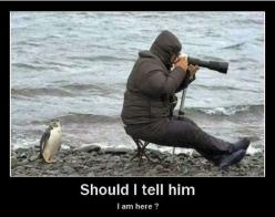 HAHA.... Sometimes you just have to let people figure it out for themselves..: Animals, Funny Stuff, Penguins, Humor, Funnies, Things, Smile, Photo