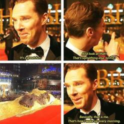 Haha YES! Benedict Cumberbatch wakes up every morning covered in gold. I'd believe it in an instant.: Geek, Nerd, Morning Covered, Cumberbatch Wakes, The Hobbit, Benedict Cumberbatch Funny, Sherlock Holmes, Bbc