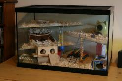 Hamster Home! I've always had an issue with shelves to close to the top...my hammy chews!: Hamster Tank, Dwarf Hamsters, Hamster House, Ella S Hamsters, Hamster Stuff, Hamster Hauls, Diy Hamster, Hamster Cages