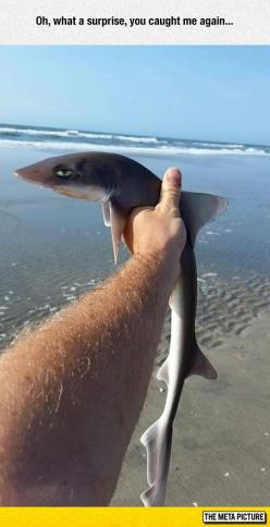 He Isn't Mad, He's Just Disappointed: Sarcasm Shark, Animals, Baby Shark, Funny Pictures, Funny Stuff, Humor, Caught, Sharks, Surprise