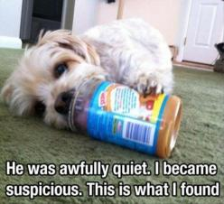 He was awfully quiet...LOL que lindo: Peanuts, Animals, Dogs, Pet, Funny, Puppy, Peanut Butter