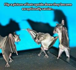Hehe why is this funny?: Picture, Animals, Giggle, Sassy Bats, Funny Stuff, Funnies, Things