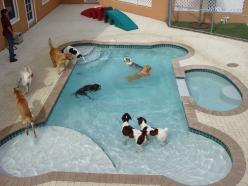 How cool is this? This must be a doggie daycare (or a very rich animal lover). Dog Bone Shaped Pool: Doggie, Animals, Idea, Dogs, Dream House, Pets, Dog Pools, Dog Stuff