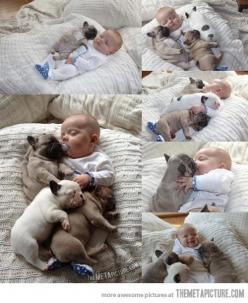 How cute is this!! I love French bulldogs REALLY WANT A FRENCH BULL DOG: Babies, Animals, Sweet, Dogs, Pet, Puppy, Adorable