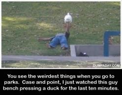 How do you even get a duck to let you hold it?: Benches, Funny Pictures, Ducks, Funny Stuff, Funnies, Bench Pressing
