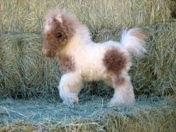How precious is this?!?!?!? i can't believe how sweet this little guy is. i want him bad: Fluffy Horse, Tiny Baby Animal, Cutest Baby Animal
