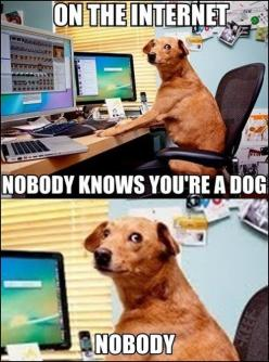 I'm pretty sure they post all the crazy cat pictures to degrade the cat's image.: Animals, Dogs, Funny Stuff, Humor, Funnies, Funny Animal, Internet, Funnystuff