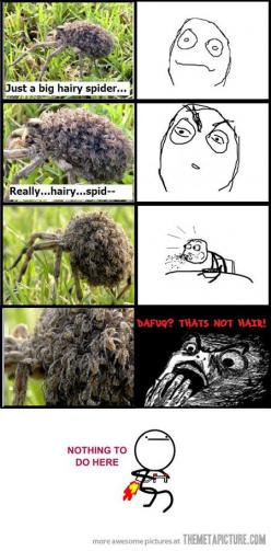 I've encountered one of these, they are terrifying. We scared the spider and babies flew off in every direction.: Baby Spiders, Nope Nope, Funny Stuff, Funnies, Humor, Hate Spiders, Hairy Spider